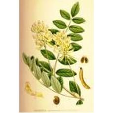 Astragalus Liquid 2 oz (Organic)